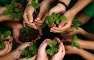 Diatur Dalam Perbup, Warga Madina yang Mau Nikah Harus Tanam Pohon