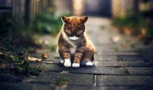 Sedekah Pada Kucing Cuma Tulang Ikan, Balasannya di Luar Dugaan, Ini Kisahnya