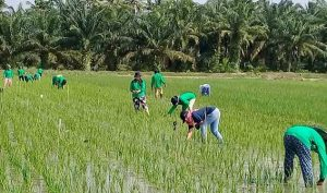 Apa Itu Pertanian, Manfaat, Tujuan Hingga Jenisnya