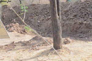 Lagi Viral, Tantangan Ketajaman Mata Mencari Macan Tutul, 99% Orang Tidak Mampu