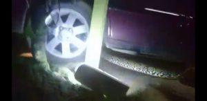 Video Pemuda Nekat Menarik-narik Ular Piton dari Mobil demi Selamatkan Warga
