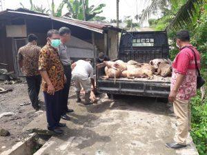 Para Polisi ini Tetap Bekerja saat Liburan Natal Bahkan Hingga Kuburkan Bangkai Babi