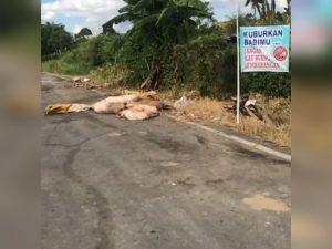 Gelontorkan Rp5 Miliar, Pemprov Sikapi Polemik Babi di Sumut