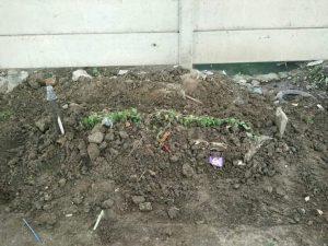 4 Bangkai Babi Ditemukan di Bawah Tol, Dikebumikan Layaknya Kuburan Manusia