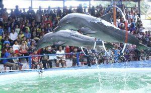 Sirkus Lumba-lumba Keliling Resmi Dilarang