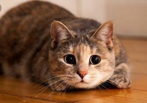 Kucing Dicuri dan Dijagal untuk Tambul, Gubernur Sumut Angkat Bicara